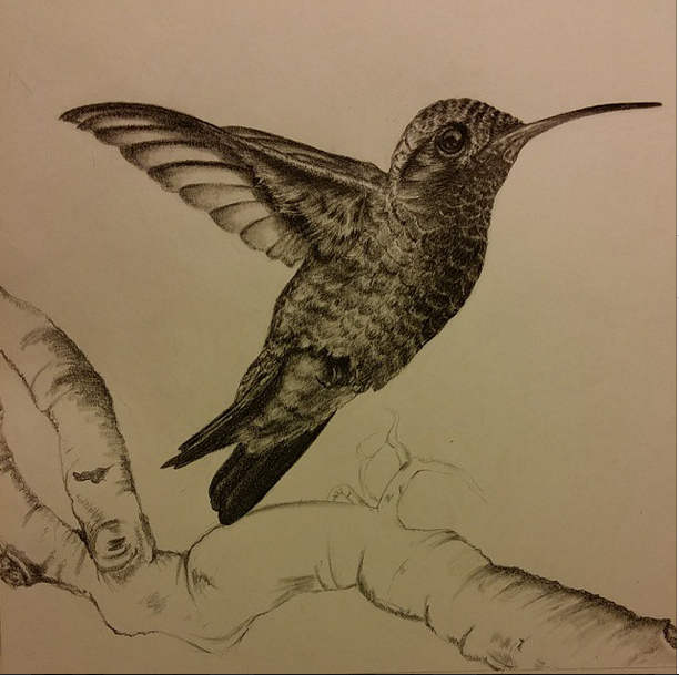 HUMMINGBIRD IN GRAPHITE small.jpg