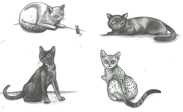 0_1465118949673_cat sketches.jpg