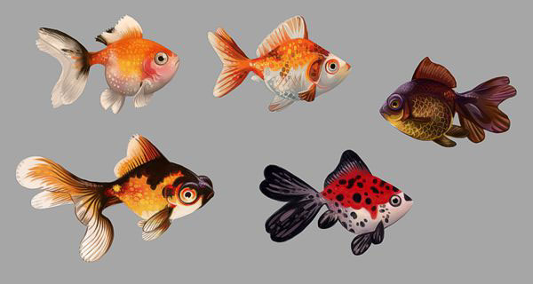 0_1465406656357_gold fish studies.jpg