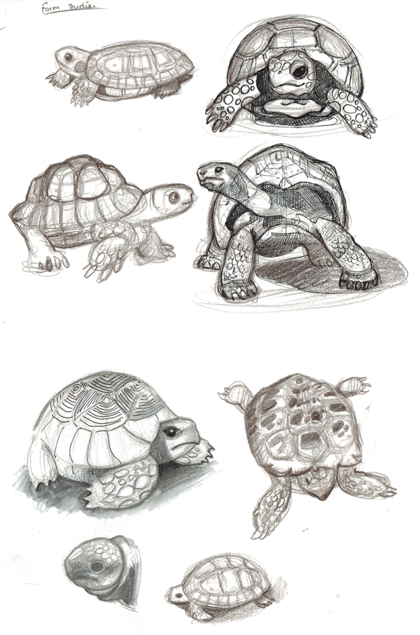 0_1466008265884_tortoise form studies.jpg