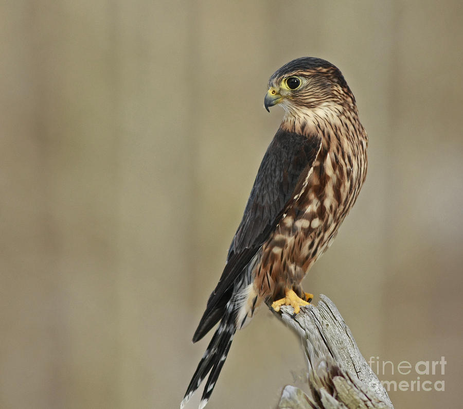 0_1471287186411_magical-moments-with-merlin-inspired-nature-photography-by-shelley-myke.jpg