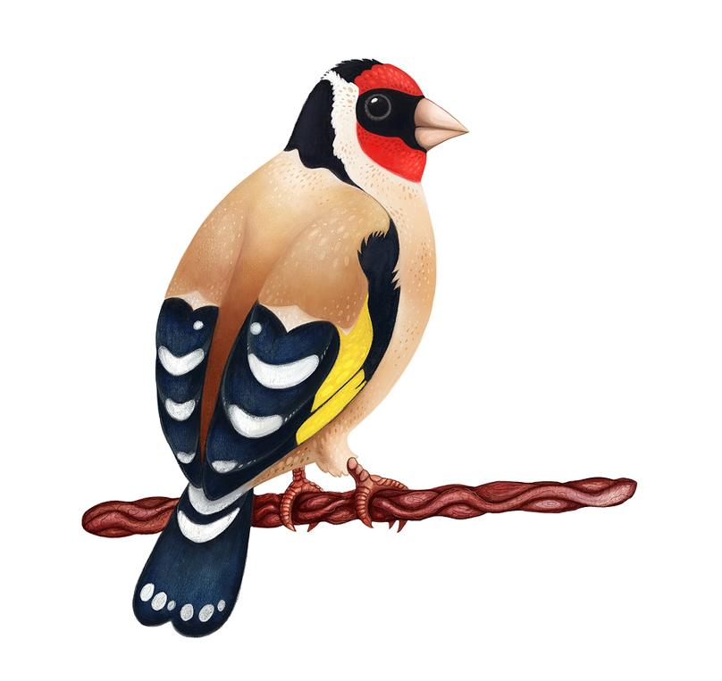 0_1495698252628_goldfinch4.jpg