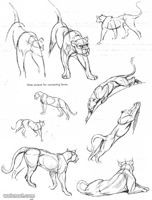 0_1516777300183_12-how-to-draw-animals.jpg