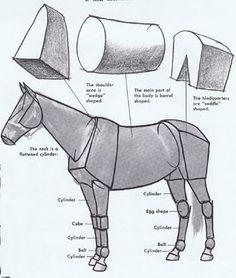 1_1516839698562_drawn-horse-horse-anatomy-3.jpg