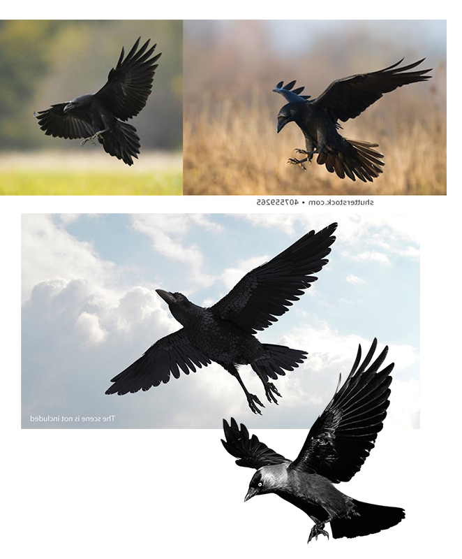 0_1544734224863_birds-wings.png