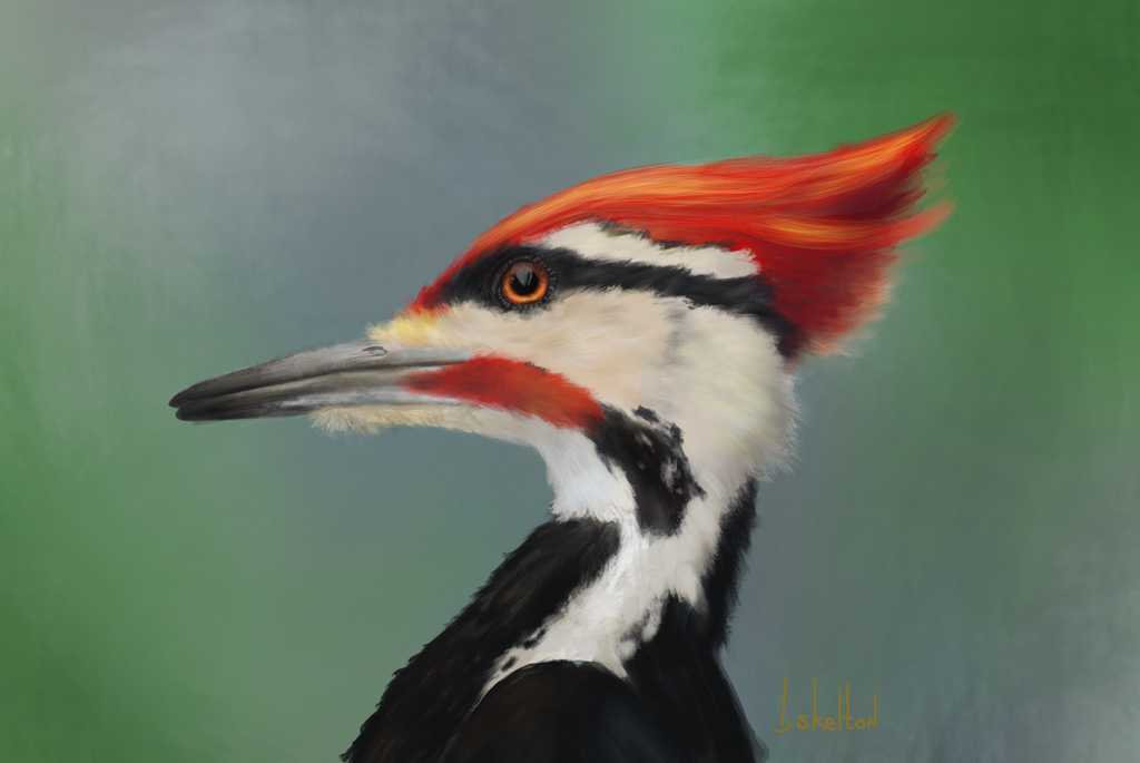 woodpecker_small.jpg
