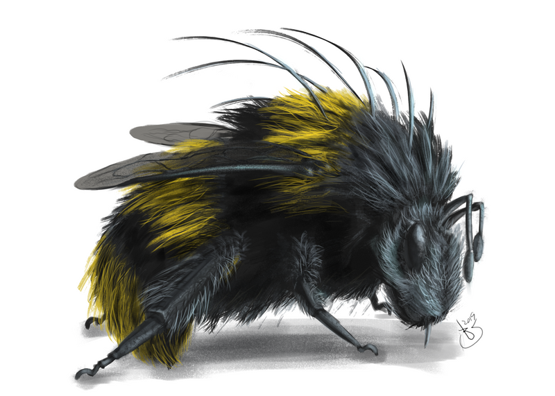 bee concept.png