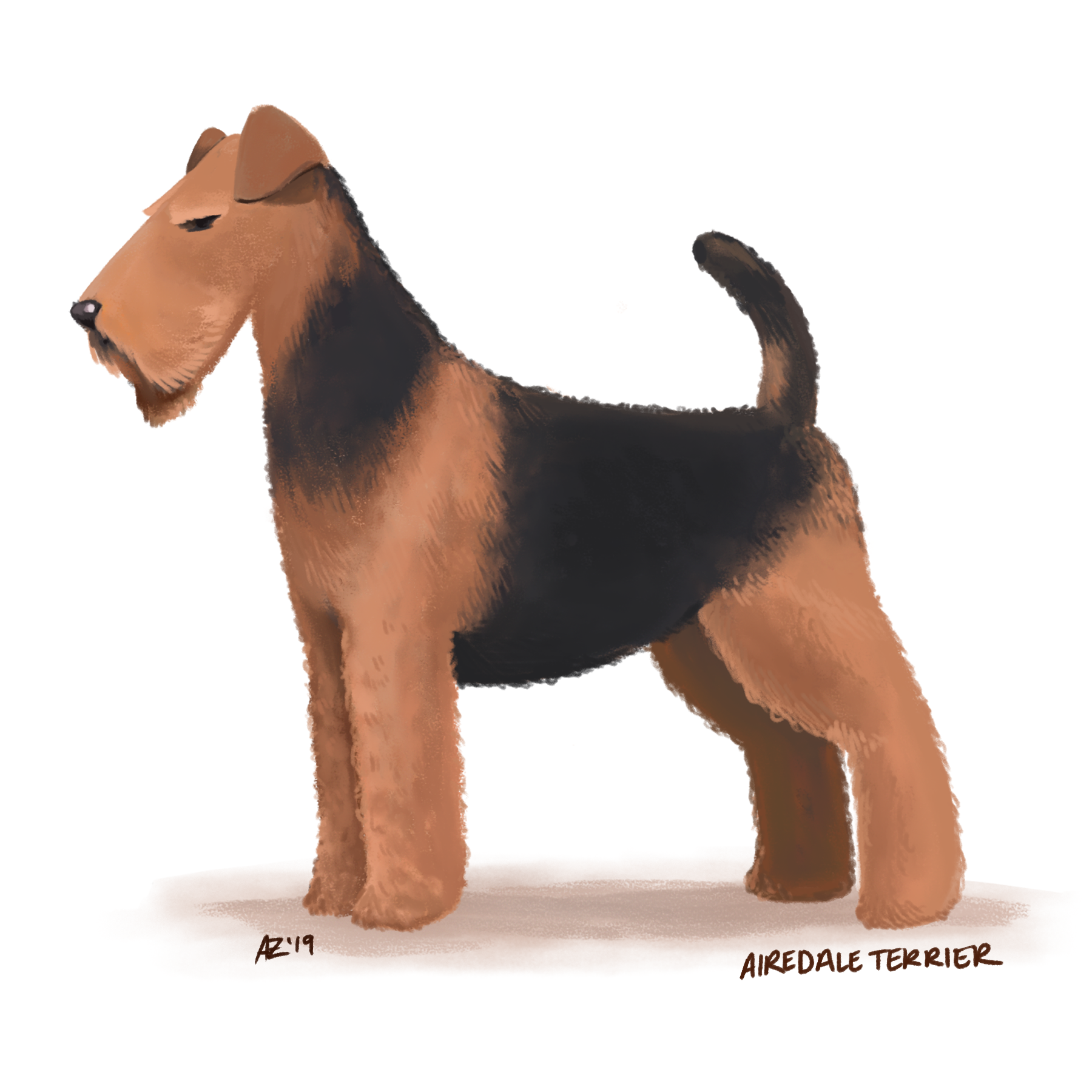 dogs - airedale terrior.png