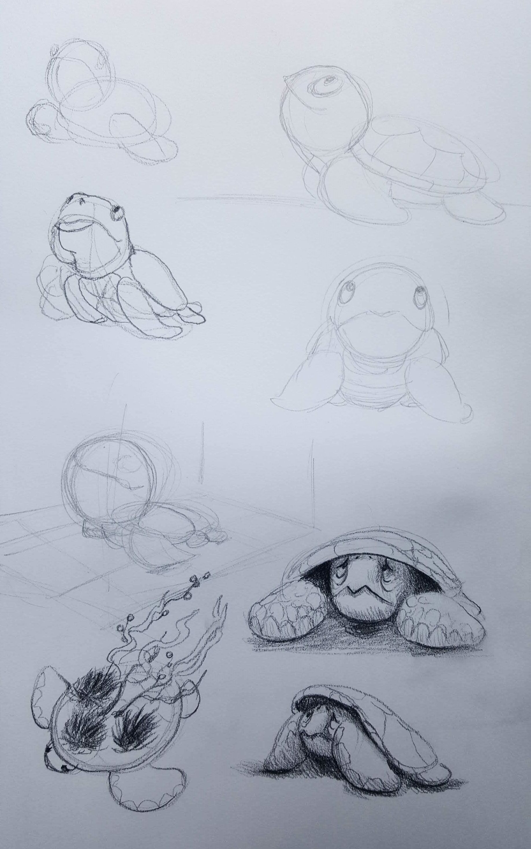 turtle concepts.jpg