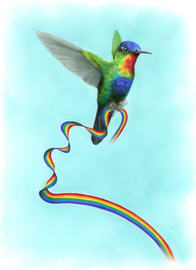 Rainbow Hummingbird without text, Amanda Bancroft.jpg