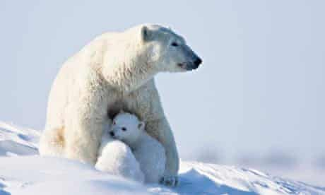 A-polar-bear-with-her-cub-011.jpg